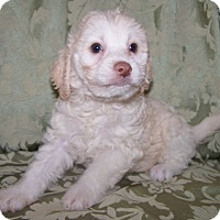 Adopt A Pet :: Morty - La Habra Heights, CA