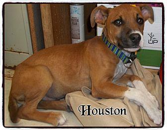 Boxer Mix Puppy for adoption in muskogee, Oklahoma - houston