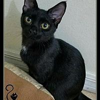 Adopt A Pet :: Hermes (JC) 5.16.16 - Orlando, FL