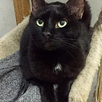 Adopt A Pet :: Black Diamond - St. James City, FL