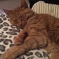Adopt A Pet :: Mollie (Courtesy Listing) - Hampton, VA