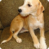 Adopt A Pet :: Sadie ADOPTION PENDING - East Hartford, CT
