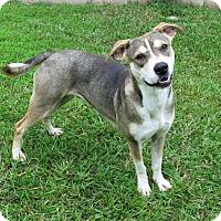 Adopt A Pet :: Ruth - Lufkin, TX