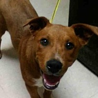 Adopt A Pet :: KORBIN - Rogers, AR