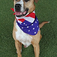 Adopt A Pet :: Jaz - Odessa, FL