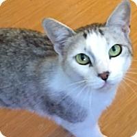 Adopt A Pet :: Alisha - LaJolla, CA