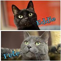 Adopt A Pet :: Eddie Chapski 162208 - Atlanta, GA