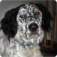 Adopt A Pet :: Rex - Columbus, OH