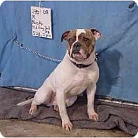 Adopt A Pet :: Rocky/Adopted! - Zanesville, OH