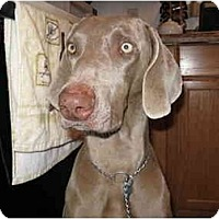 Adopt A Pet :: Chester  **ADOPTED** - Eustis, FL