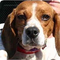 Adopt A Pet :: Winnie - Portland, OR
