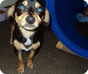 Terrier (Unknown Type, Medium) Mix Dog for adoption in Mt. Vernon, Illinois - Quinn