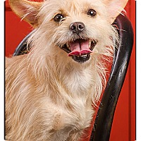 Adopt A Pet :: Daisy Mae - Owensboro, KY