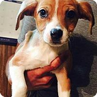 Adopt A Pet :: Bess - Ocala, FL