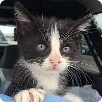Adopt A Pet :: Otto PB - Schertz, TX