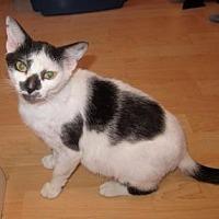 Adopt A Pet :: Katniss - Fort Lauderdale, FL