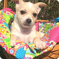 Adopt A Pet :: Val - Boulder, CO