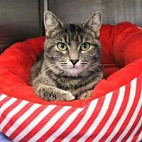 Adopt A Pet :: Tuscany - Denver, CO