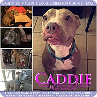 American Pit Bull Terrier Mix Dog for adoption in Hearne, Texas - Caddie