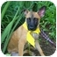 Photo 4 - Shepherd (Unknown Type) Mix Puppy for adoption in Wayne, New Jersey - Scruffy