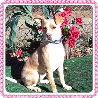 Labrador Retriever Mix Dog for adoption in Marietta, Georgia - DIAMOND