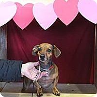 Adopt A Pet :: Zeke - PENDING, in Maine - kennebunkport, ME