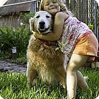 Adopt A Pet :: Sandy - Yorktown, VA