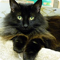 Adopt A Pet :: Monica - Westville, IN