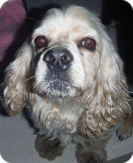 Cocker Spaniel Mix Dog for adoption in McIntosh, New Mexico - Felicia