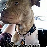 Adopt A Pet :: Cashew - Cary, IL