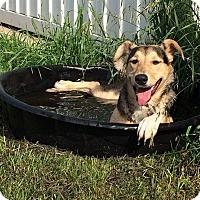 Adopt A Pet :: Rosie - Woodstock, ON