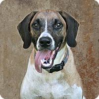 Adopt A Pet :: Odin - Lufkin, TX