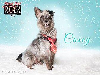 Terrier (Unknown Type, Medium) Mix Dog for adoption in New York, New York - Casey