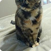 Adopt A Pet :: Holly - Harriman, NY