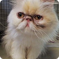 Adopt A Pet :: Angel - Grants Pass, OR