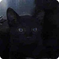 Adopt A Pet :: A416009 - Santa Maria, CA
