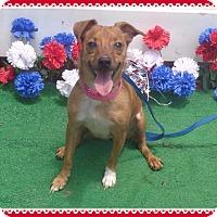 Adopt A Pet :: TINKERBELLE - Marietta, GA