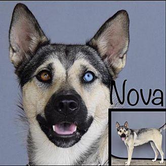 Shepherd (Unknown Type)/Husky Mix Dog for adoption in Longview, Texas - Nova