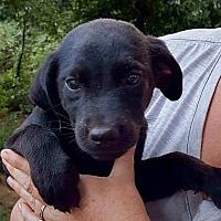Adopt A Pet :: Saint - CRANSTON, RI