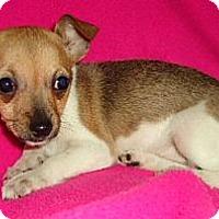 Adopt A Pet :: Minxie - Plainfield, CT
