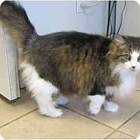 Adopt A Pet :: April - Pascoag, RI