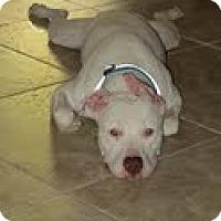Adopt A Pet :: Asher - justin, TX