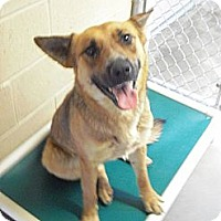 Adopt A Pet :: Willow - Wickenburg, AZ