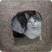 Adopt A Pet :: Sandy - Hamburg, NY