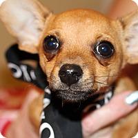 Adopt A Pet :: Julio - Kempner, TX
