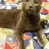 Adopt A Pet :: Smokey - McDonough, GA