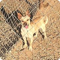 Adopt A Pet :: Roscoe - Post, TX