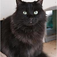 Adopt A Pet :: Kiwi - Corinne, UT