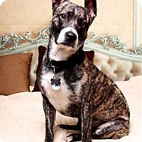 Adopt A Pet :: Scooter - Jackson, TN