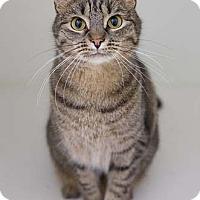 Adopt A Pet :: Monica - Merrifield, VA